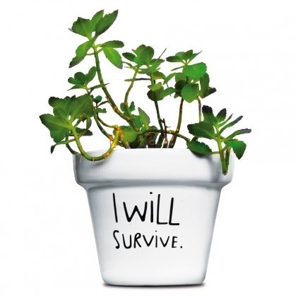 ... Surviving